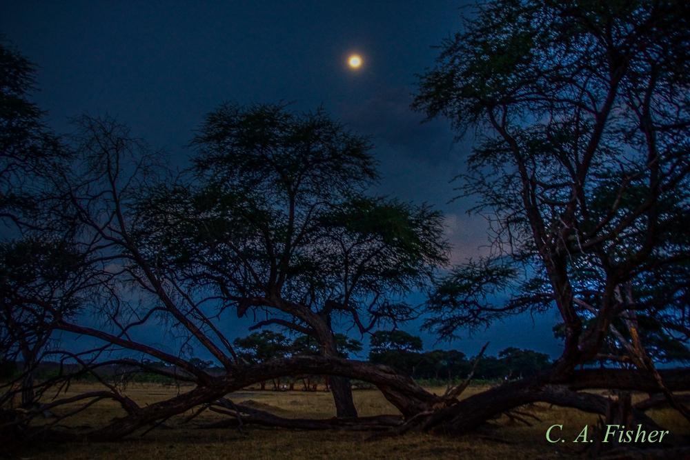 Moonrise in the African Savanah