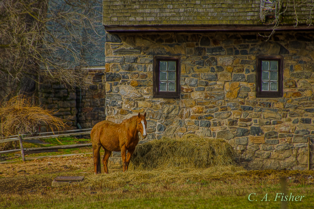 Horse and Stone Building
