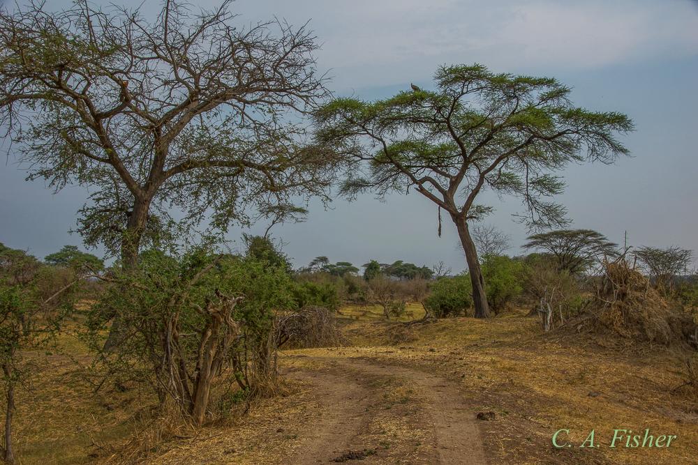 Road Through the African Bush