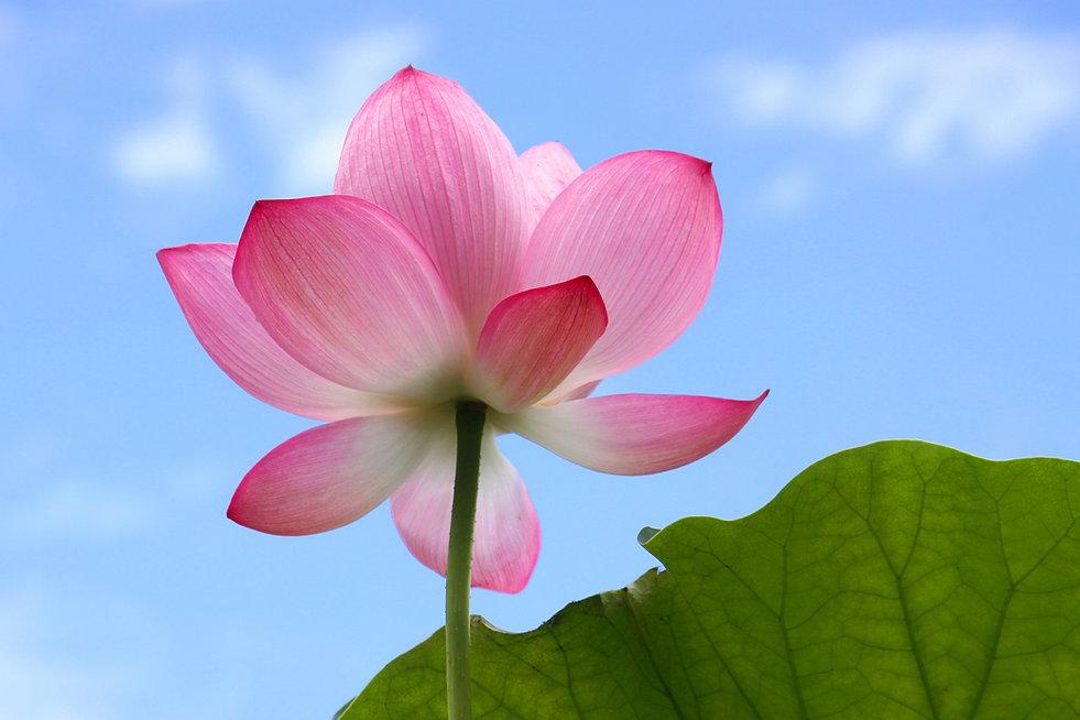 シンギングボウル、自律神経をと整える、横浜・東戸塚、自然療法サロンfucoの部屋、ソレンセン式神経反射療法、ディエンチャン、