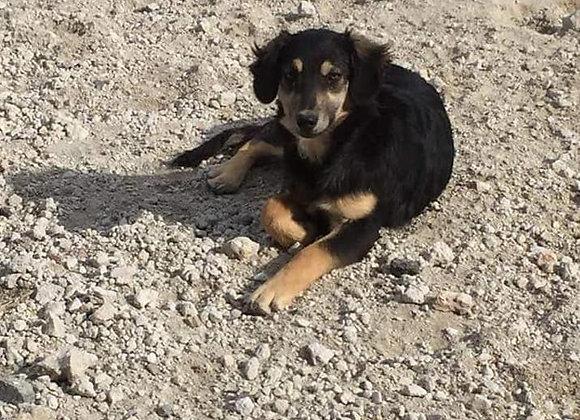 Sponsor veterinary care for 1 dog