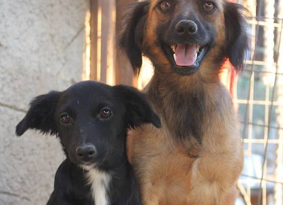 Sponsor the full cost of 2 dogs (For one month)