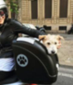 Pet motocycle dog carrir POW pet carrier