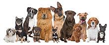 Dog Pack