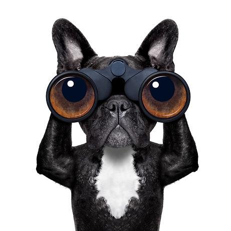 dog with binoculars