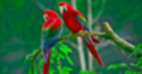 macaw-parrot-bird-tropical_edited.jpg