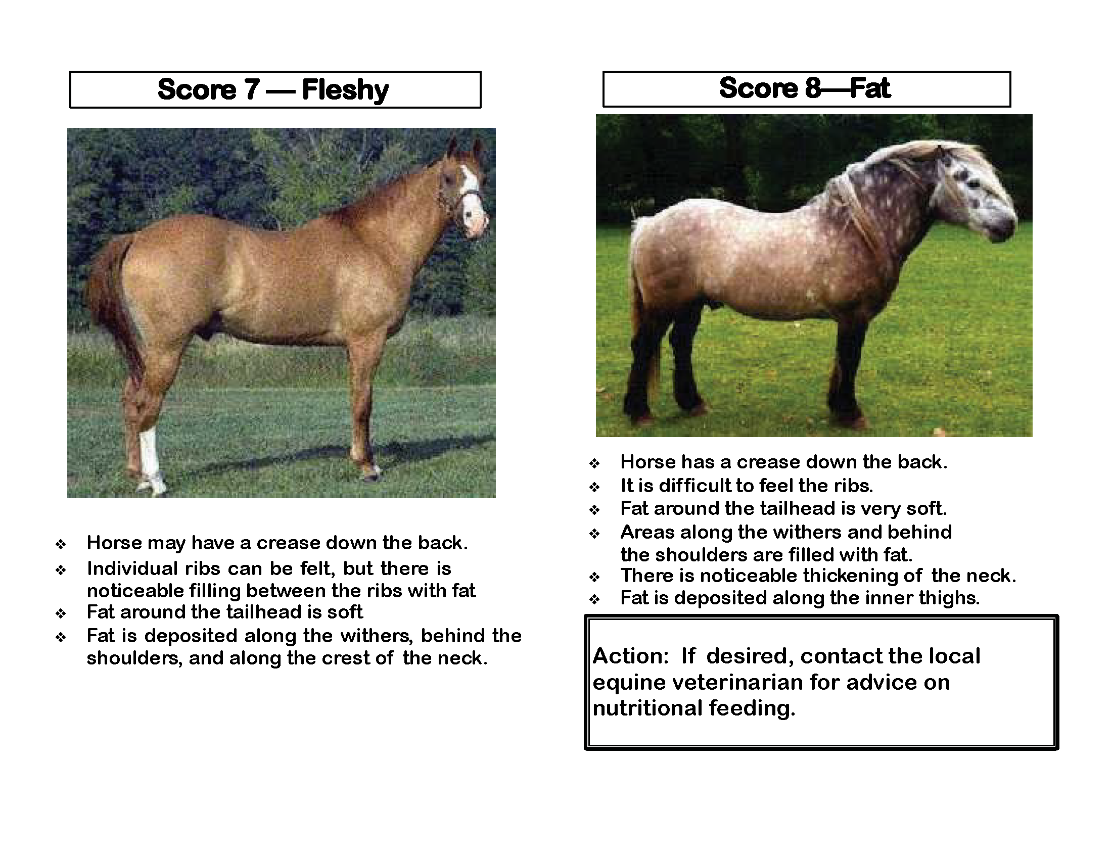 OK Equine_Abuse_and_Neglect_Flip_Chart_Page_10