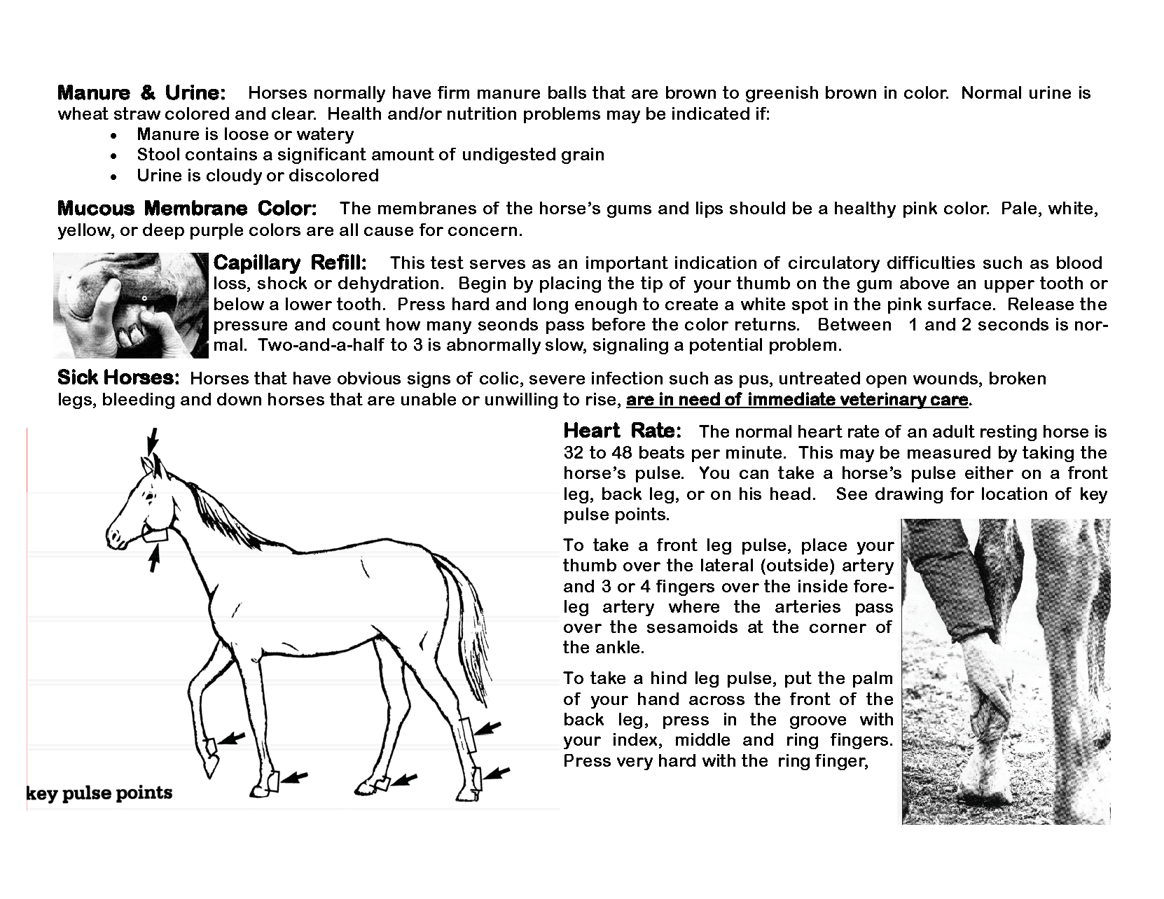 OK Equine_Abuse_and_Neglect_Flip_Chart_Page_15