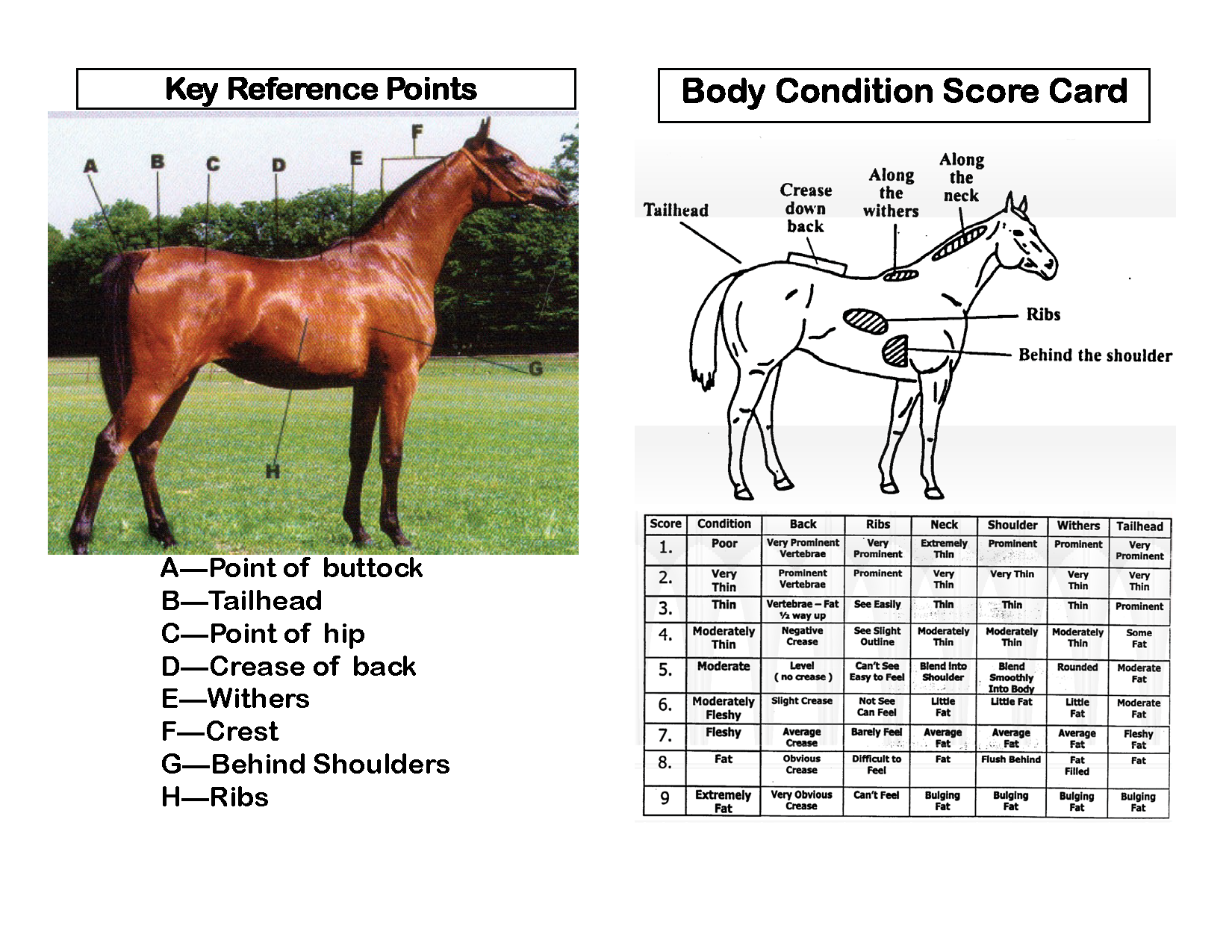 OK Equine_Abuse_and_Neglect_Flip_Chart_Page_06