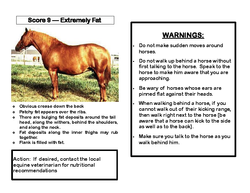 OK Equine_Abuse_and_Neglect_Flip_Chart_Page_11