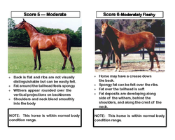 OK Equine_Abuse_and_Neglect_Flip_Chart_Page_09
