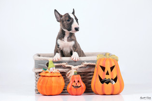 Pet Photography by Anett Elek _.jpg