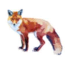 Fox_nologo copy.jpg