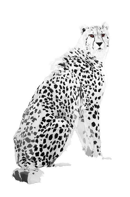 Cheetah No.2