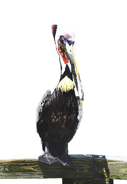 Charlie_pelican_website.jpg