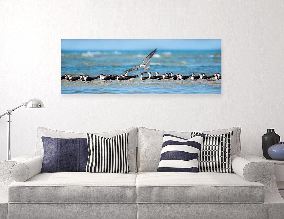 Wildlife fine art sample gallery black skimmer