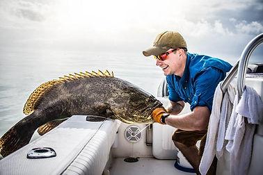 deep sea fishing goliath grouper