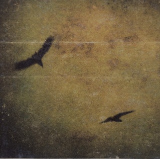 oiseaux dans brume.jpg