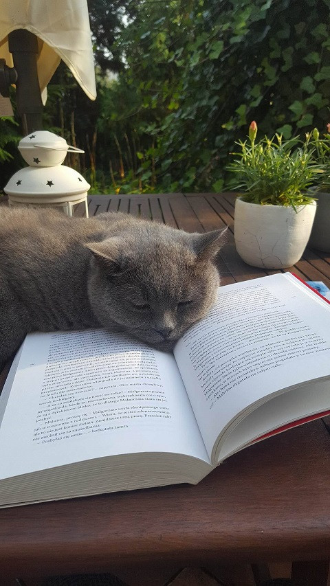 Kot i książka