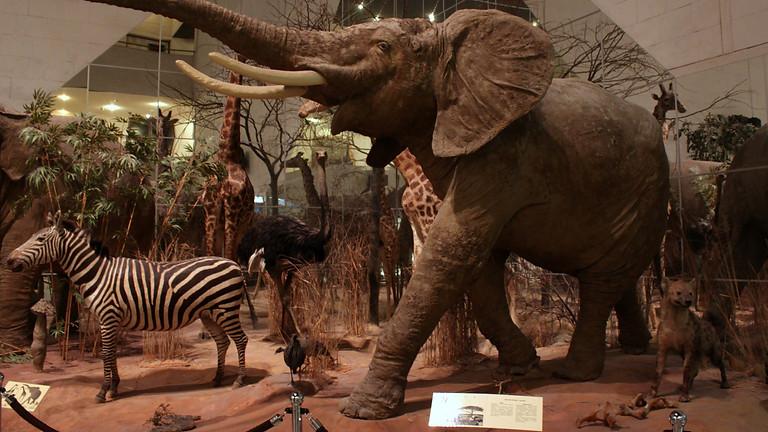 Невероятные открытия в музее Дарвина