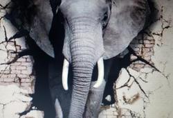 Elephant In Da Room