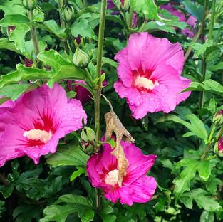 Les fleurs d'Elguia
