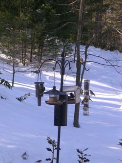 Birdfeeders in winter