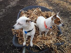 helpers on the farm.jpg
