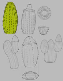sketch cactus