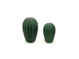 foto moringa cactus