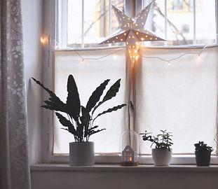 Christmas%20Star_edited.jpg