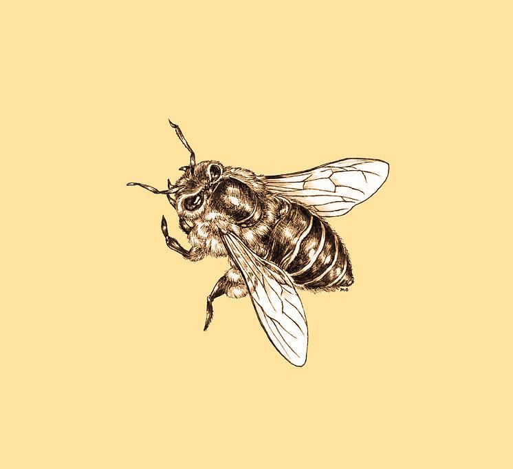 honeybee1a.jpg