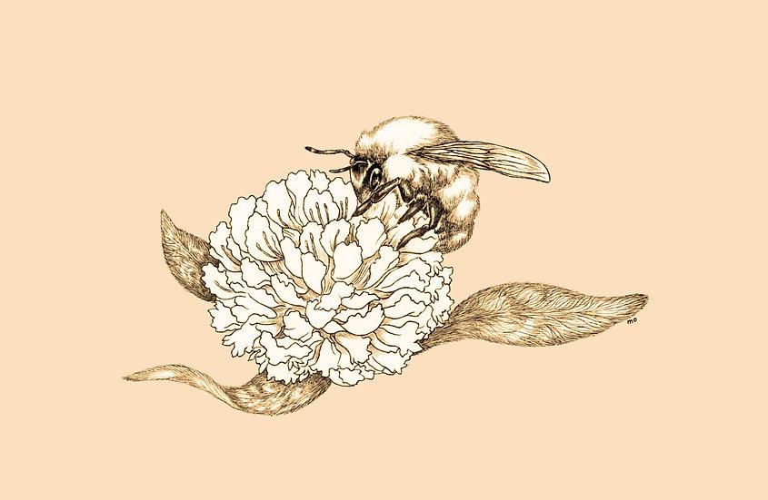 honeybee2a.jpg