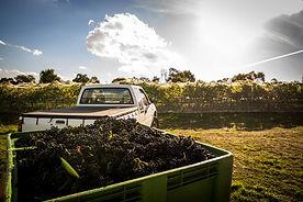 grape picking bin 2014.jpg