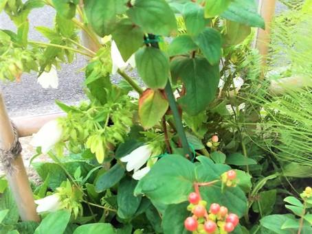 お庭の盆栽