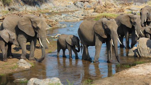 Tarangire - the largest elephant migration in Africa