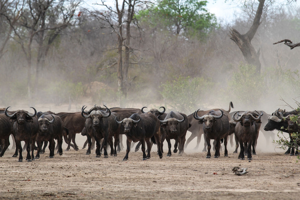 High concentration of wildlife in the watering holes