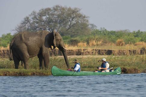 Canoe & walking safaris offering close encounters