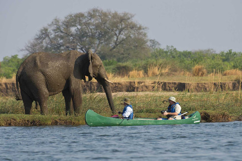 Canoe & walking safaris offering close encounters