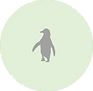African penguin.png