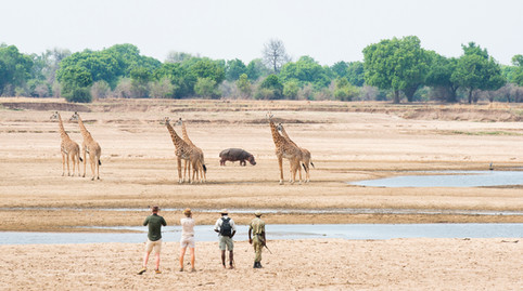 Lagoons and owbows carved by the Luangwa River created rich sources of waterholes for wildlife