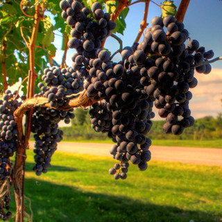 Taste exemplary wines in the Winelands
