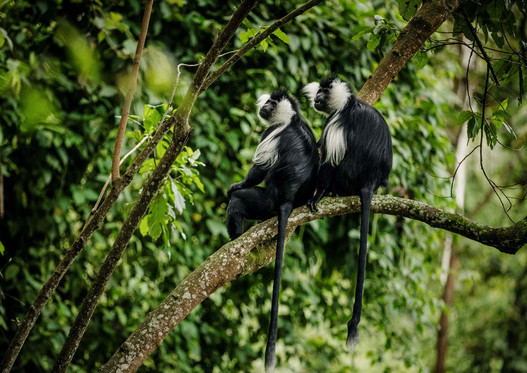 Home to 13 primate species