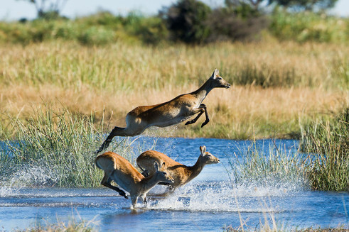 Meeting point at the crossroads of wildlife migration