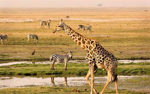 Diverse species of wildlife