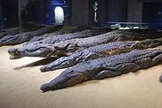 Crocodile Museum.JPG