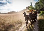 Homoki-Lodge-Horse-Driven-Carriage3.jpg