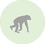 Chimpanzee icon.png