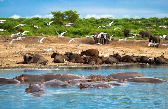 Embark on a boat safari on the Kazinga Channel