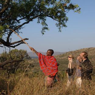 Serengeti Walking Safaris